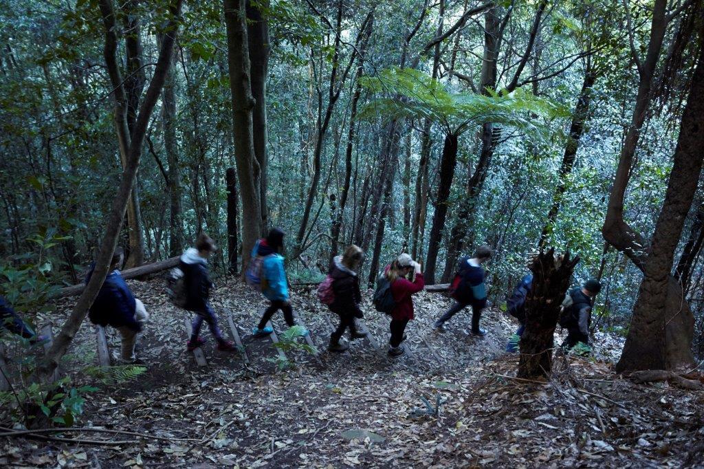 NationalPass-students-ferns-steps-trees.jpg